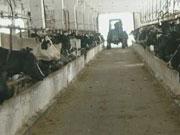 Справа добровільна. Як держава хоче легалізувати роботу сімейних ферм