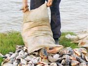 Украинцы будут есть доморощенную рыбу