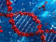 Вчені уперше спробували змінити гени усередині живої людини