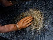 Американцы инвестируют 100 миллионов долларов в добычу золота в Украине