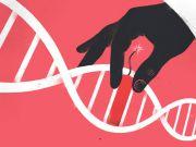 Ученые записали анимацию в ДНК с помощью CRISPR и воспроизвели ее