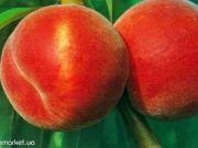 Больше всего персиков за полгода Украина продала Болгарии и Греции