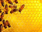 "Трейдеры ""подняли"" на экспорте мёда $37 млн"