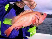 Держрибагентство кличе бізнес на вилов риби в Атлантиці