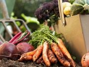 Amazon запатентовала ИИ-консультанта для садоводов-любителей