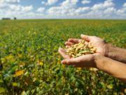 Росія заборонила постачання з України сої, соєвого шроту, соняшнику та кукурудзяної крупи. На черзі цибуля
