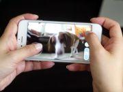 """""""Круглий Petcube"""": Розробники називають PlayDate першим в світі розумним м'ячем з вбудованою камерою для домашніх вихованців (відео)"""