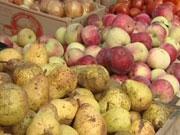 Экспорт яблок из Украины рухнул почти на 40% из-за пандемии