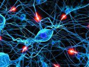 Техас першим в США дозволить терапію стовбуровими клітинами