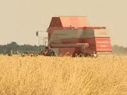 Украинские компании могут закупать крымское зерно для экспорта - УЗА