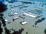 """Выплаты НАСК """"Оранта"""" по возмещению ущерба от стихийного бедствия в Западной Украине может составить более 10 млн грн"""