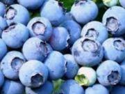 Україна - друга в світі за темпами зростання експорту лохини