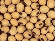 Аграрии перекрыли дороги в трех областях в знак протеста против отмены возмещения экспортного НДС для масличных