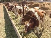 Порошенко приравнял фермеров к предпринимателям: что это меняет