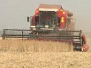 В МВФ оценили сельское хозяйство Украины в 10% ВВП