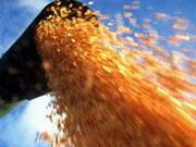 Українські аграрії вже експортували понад 11 мільйонів тонн зерна