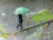 Дощова осінь - хороший прогноз для бізнесу
