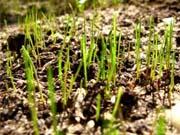 Кадастр земель заполнен менее чем на 15%, - МинАП