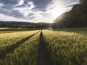 Государство перечислило 64 млн грн на кредиты украинским аграриям