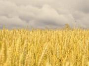 Арбузов: сільське господарство є ключовою галуззю економіки України