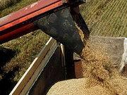Мінекономрозвитку запропонувало продовжити мита на експорт зернових