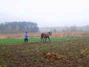 Четверть крестьян в Украине до сих пор пашут землю на лошадях
