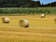 Кабмин хочет сократить финпомощь аграриям