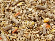 Державна продовольчо-зернова корпорація України експортуватиме Катару комбікорми за рецептами замовника