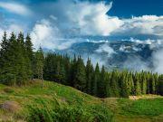 Ліси в Україні: скільки грошей витрачали на відновлення в останні 10 років