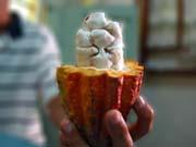 Шоколад поднимется в цене: какао-бобы подорожали до максимума за 3 года