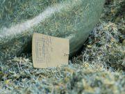 В одному з лісопарків Дніпра знайшли мішки з порізаними гривнями (фото)