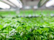 До 2022 року світовий ринок вертикальних ферм досягне $6 млрд