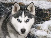 Нейромережу навчили передбачати поведінку собак
