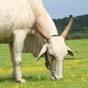 На підтримку тваринництва наступного року планується 2,3 мільярда - Мінагро