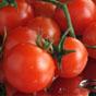 Ціни на помідори в Україні встановили історичний антирекорд
