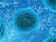 Найдены питающиеся чистящими средствами бактерии