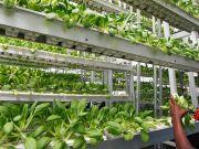 Немецкий стартап откроет в Европе тысячу вертикальных ферм до конца 2019 года