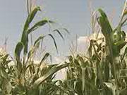 Министр рассказал, как будут продавать сельхозземли