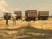 """В разі обвалу цін на зерно, відбудеться """"хлібний Майдан"""" - думка"""