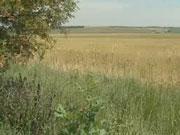 Гривну отправили в сельскую местность