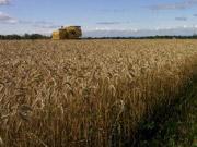 85% украинских фермеров не страхуют свой урожай