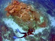 В ОАЕ з'являться найбільші в світі штучні коралові сади