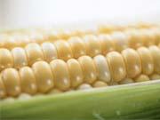 Україна нарощує експорт пшениці і кукурудзи