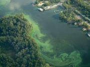 """""""Цветение"""" водорослей Днепра хотят перерабатывать в биогаз"""