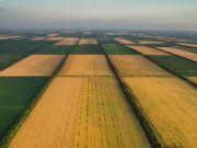 Минагро выступило за отмену бесплатной приватизации сельхозземли