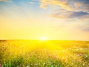 Середня ціна гектара землі сільськогосподарського призначення