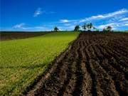 Продажа земли за полгода принесла бюджету 211 млн грн