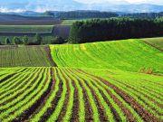 Рынок земли: правительство утвердило порядок проверки покупателя со стороны нотариусов