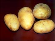 Експерти: Наступного року можемо залишитися без картоплі