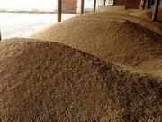 Аналітик: Квоти не вплинуть на обсяги експорту зернових